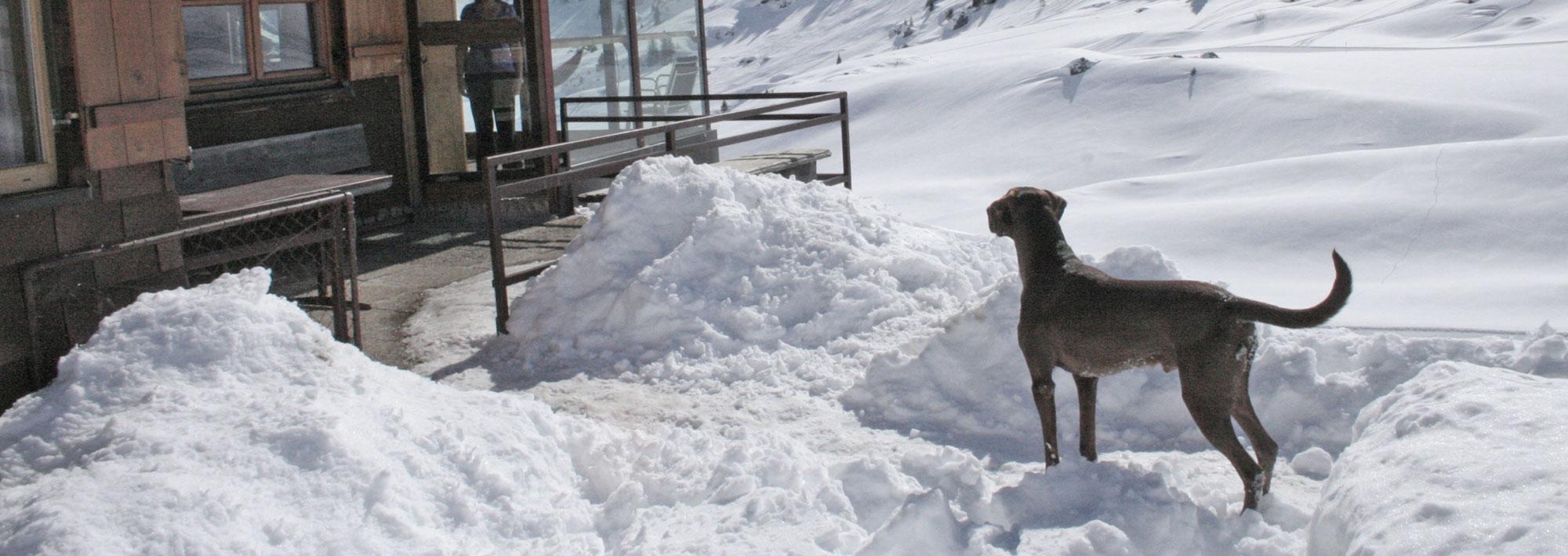 Hütte mieten am Arlberg | Pfefferkornhütte | Urlaub mit Hund - Ridgeback